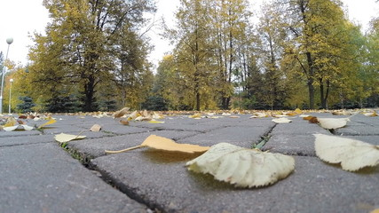 Fluttering in the wind leaves the track park. Autumn in the city