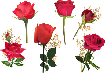 six isolated bright red roses collection