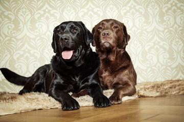 entspannte Hunde