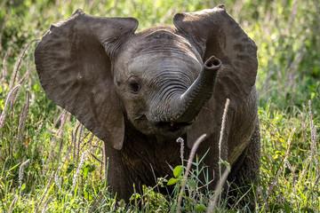 Cute Baby Elephant