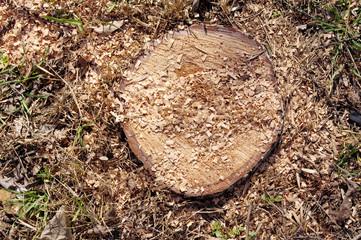 Closeup of stump