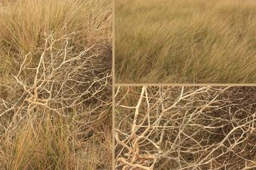 Littoral - Dune - Végétation
