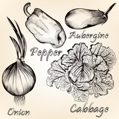 Collection of vector hand drawn vegetables for design