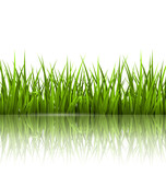 Green grass lawn with reflection on white. Floral nature spring