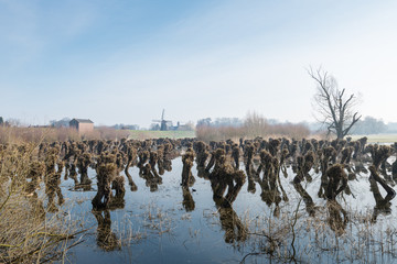 Typical Dutch landscape in winter