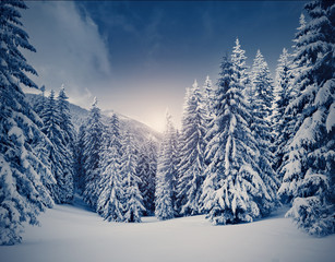 Amazing winter landscape