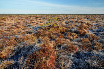 Bog landscape with blue sky, Estonia