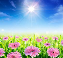 field in blooming in springtime