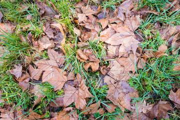 Brown leaves fallen on grass