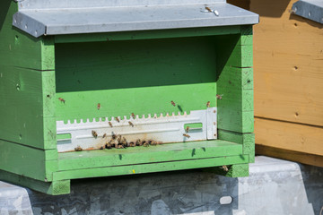 Bienenkasten im Tessin