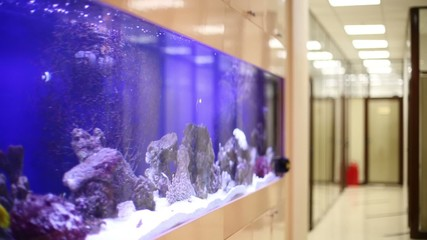 Tropical fishes swim in large built-in aquarium with pure water