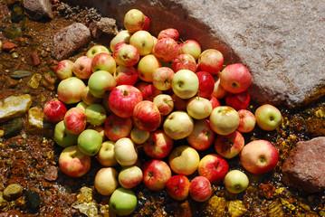 Куча яблок в ручье