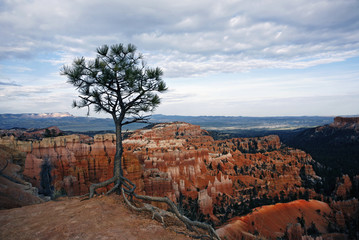 A view over Bryce Canyon and the landscape of the sandstone rock formations.