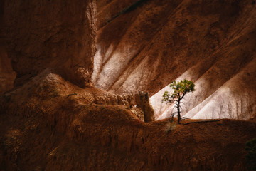 The landscape of Bryce Canyon, with deep valleys and ridges. A single tree.