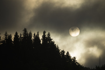 The sun in the sky above pine trees, shrouded by mist and cloud.