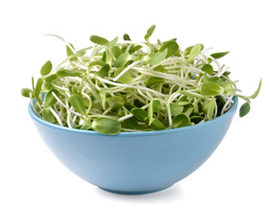 green young sunflower sprouts in blue bowl