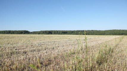 Field of grey dry oblique grass before wood