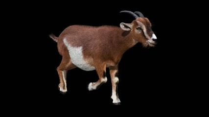 Goat Run Cycle Animation with Alpha