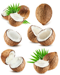 collection of coconuts isolated on the white background