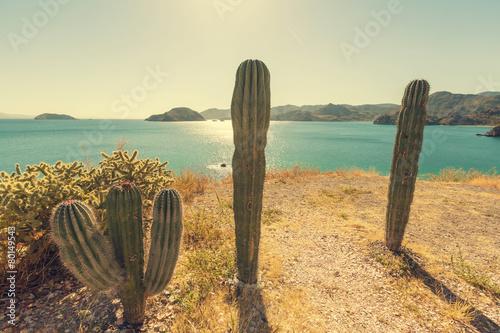 Foto op Plexiglas Landschappen Cactus in Mexico