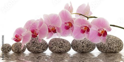 orchidea-z-wodnym-odbiciem