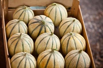 Ripe fresh melons box