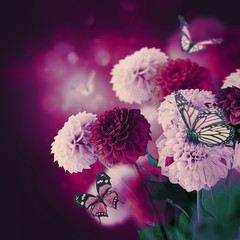 Colorful autumn chrysanthemums with flares, butterfly