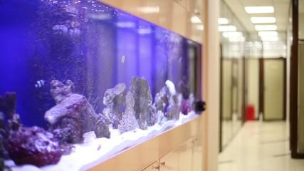 Tropical fishes swim in built-in aquarium in office