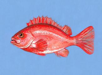 Красная рыба. Авторский рисунок-иллюстрация.