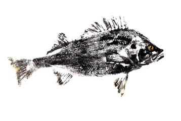 Черная рыба окунь на белом фоне.Рисунок.