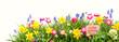 Ostern - Wiese - Freisteller - Frohe Ostern