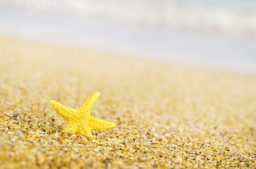 Starfish on sandy beach.