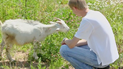 Boy pats goatling on grass field at summer day
