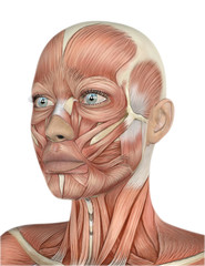 3D female face with muscle map
