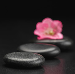 stone and petal