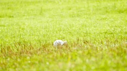 Animals in Wildlife - White Egret in natural, slow motion.