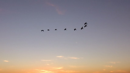 Eight Pelicans at Sunset