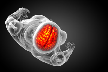 3D medical illustration of the brain