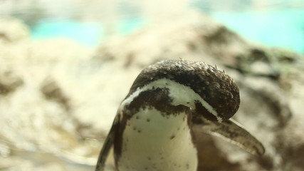 The penguin in zoo