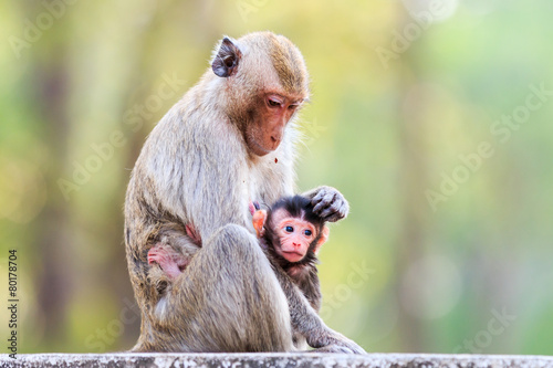 Deurstickers Aap Monkey family (Crab-eating macaque) in Thailand