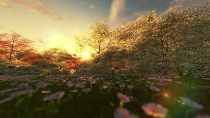 Spring scenery at sunrise, camera panning