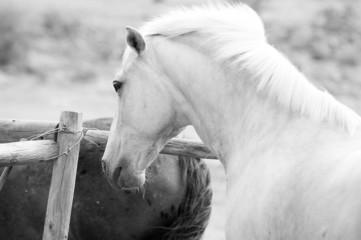 Palamino Horse Head