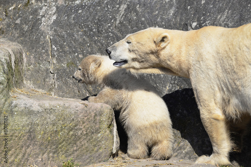 In de dag Ijsbeer Eisbär Jungtier
