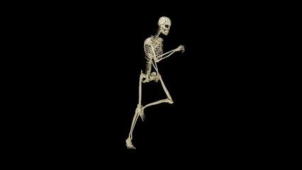 Skeleton running morphing into Human, loop, black