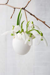Bunch of snowdrops in  egg shell on white  wooden board.