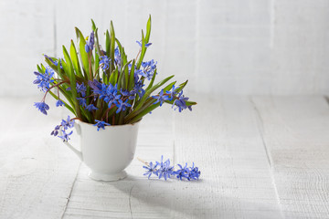 Bouquet of wood squill  (Scilla siberica) flowers  in  cup.