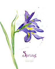 Invitation card with watercolor spring flower. iris. vector illu