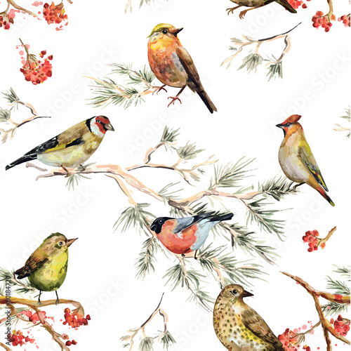 Fototapeta seamless texture of forest birds. watercolor painting