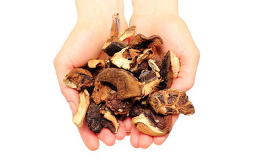 Heap of dried mushrooms in hand. White background