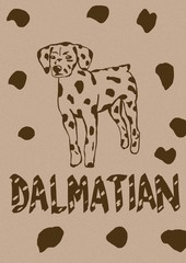 Dalmatian vintage